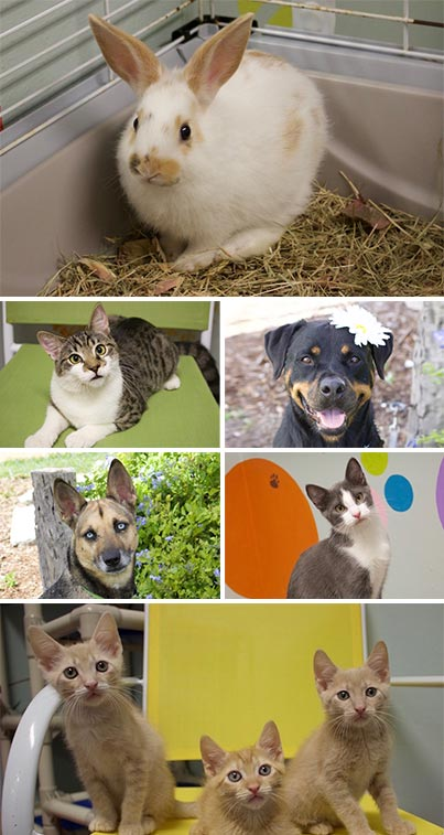 30 Day ShelterCare Insurance with Adoption | Caloosa Humane Society