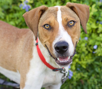 Adoption Process | Caloosa Humane Society
