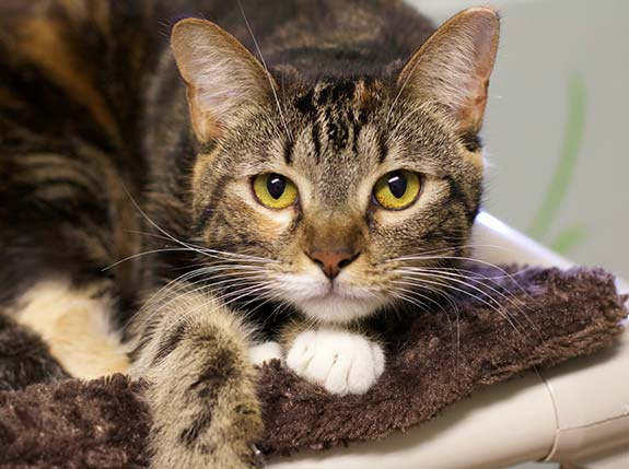 Help End Pet Overpopulation | Caloosa Humane Society