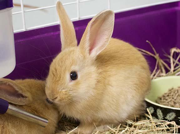 Help Stop Mass Breeding Facility Cruelty | Caloosa Humane Society