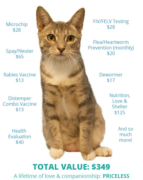 Value of a Shelter Cat | Caloosa Humane Society