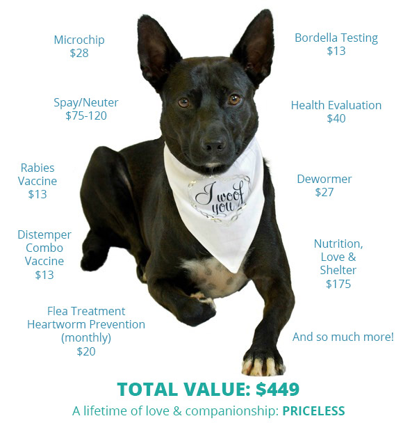 Value of a Shelter Dog | Caloosa Humane Society