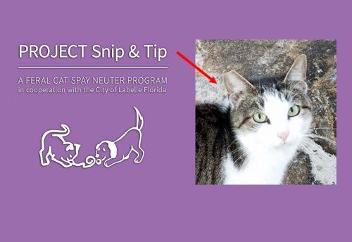 Project Snip & Tip: Feral Cat Spay & Neuter Program   Caloosa Humane Society
