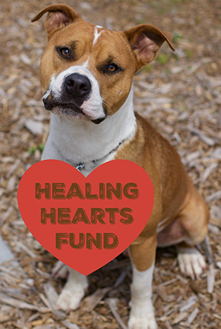 Healing Hearts Fund for Dogs in Labelle, FL | Caloosa Humane Society