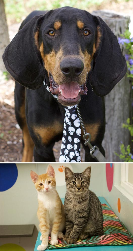 No-Kill Pet Shelter in LaBelle, FL | Caloosa Humane Society