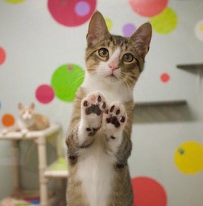 Pet Adoption Process   Caloosa Humane Society