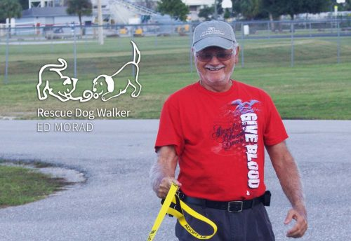 Ed Morad: Rescue Dog Walker | Caloosa Humane Society