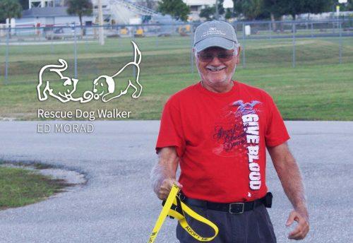 Ed Morad: Rescue Dog Walker | Caloosa Humane Society